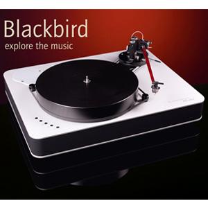 feickert-blackbird